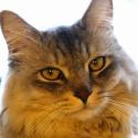 CAT HAL