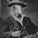 Sheep-man